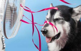 Dog enjoying fan breeze